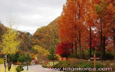 autumn-korea